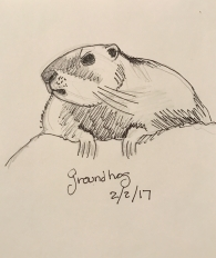 drawing of a groundhog