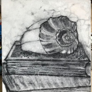 Still life conch charcoal