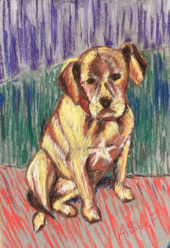 Pastel of dog on paper by Anne deFuria