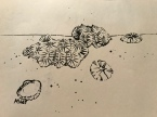 Coral, pen and ink