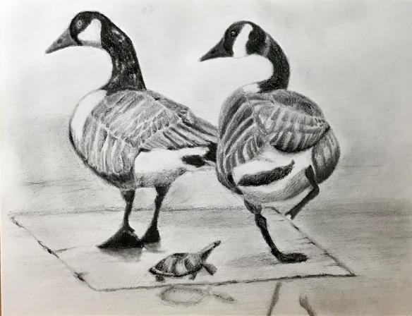 Drawing of Canada Geese