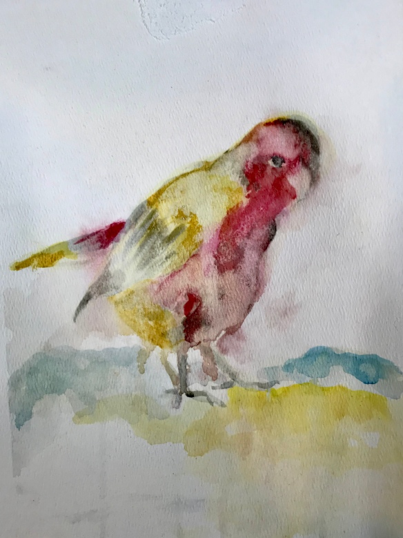 Red bird, watercolor