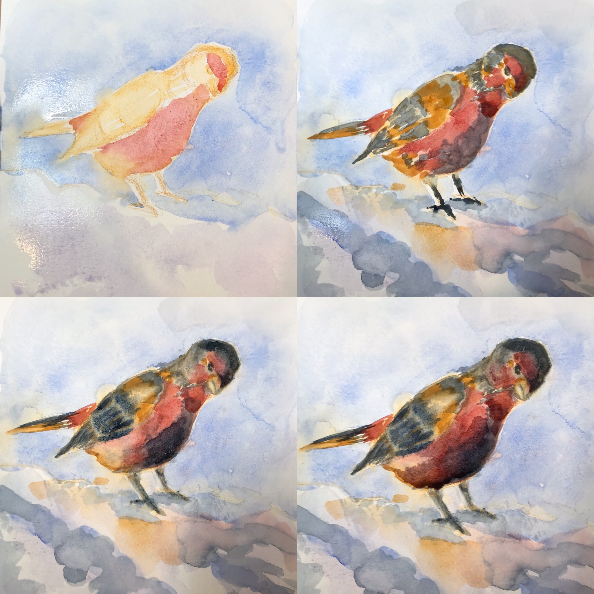 Red bird, watercolor