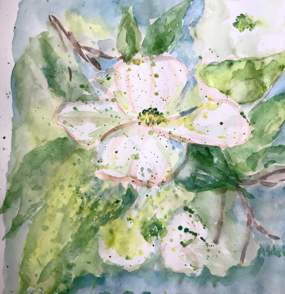 Dogwood blossom, watercolor painting